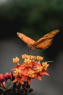 Vlinder van Myrthe Vlasveld