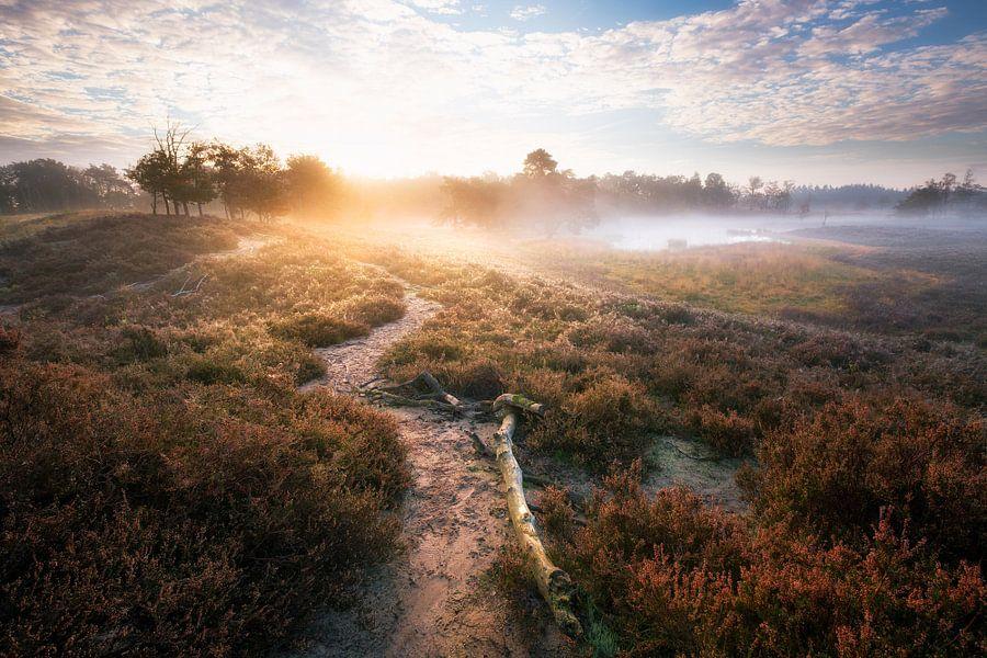Mistige ochtendgloed van Maarten Mensink
