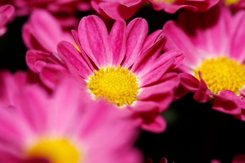 Flowers sur Erwin Zwaan
