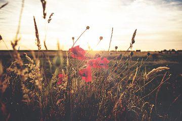 Ondergaande zon tussen klaprozen van Fotografiecor .nl