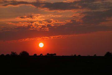 Schafe im Sonnenuntergang von Rolf Pötsch