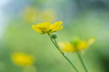 Zomers geel van Birgitte Bergman