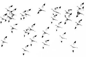 Kluten aus der Vogelperspektive von Karin Bijpost