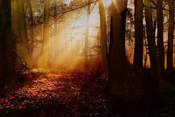 Herfst landschap van Marijke van Loon