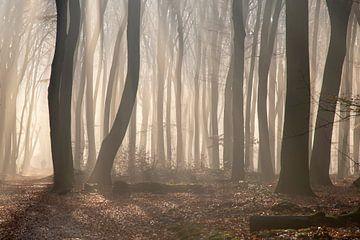 Mistige ochtend in het Speulderbos van Barbara Brolsma