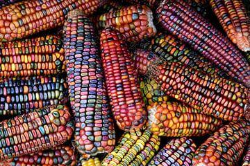 Gekleurde maïs van Ulrike Leone