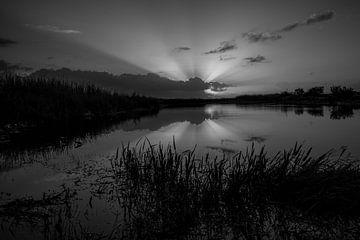 The Everglades zonsopkomst in zwart wit von Martin van der Sanden