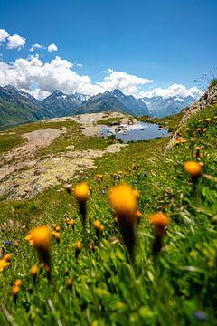 Bloemrijke uitzichten op de streek rond het meer van Sils van Leo Schindzielorz