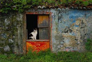 kat in deuropening van