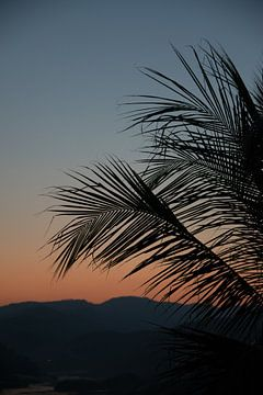 Palmbladeren bij zonsondergang van Bibian Been