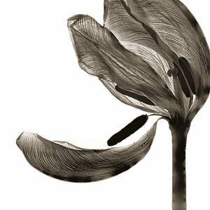 Tulip I van