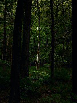 Spotlight van Jane Lin Ness