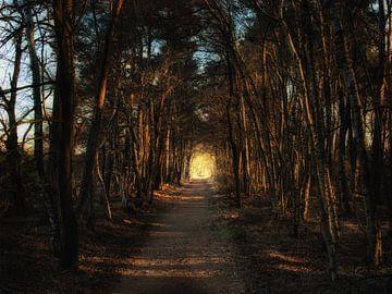 Der Weg zum Licht. von mkk_pictures