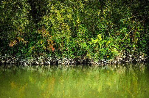 Kleuren van de mangrove - Biesbosch