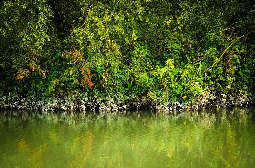 Kleuren van de mangrove - Biesbosch van Ricardo Bouman | Fotografie
