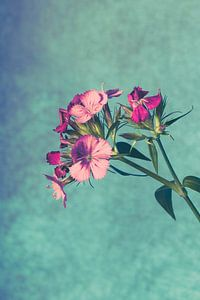 onbekende bloem van Lavieren Photography