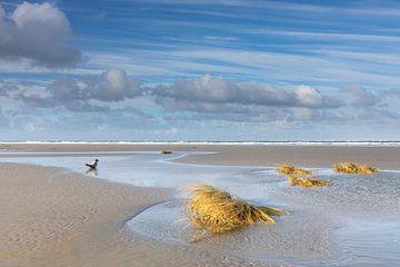 Allein, Robbe am Strand von Anja Brouwer Fotografie