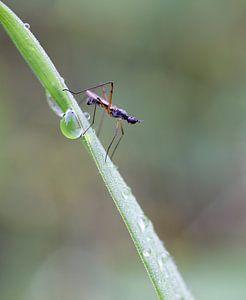 Klein vliegje op een grasspriet.
