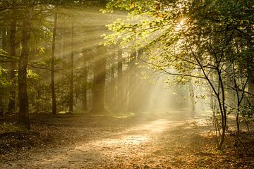 Fairytale Forest von Ellen van den Doel
