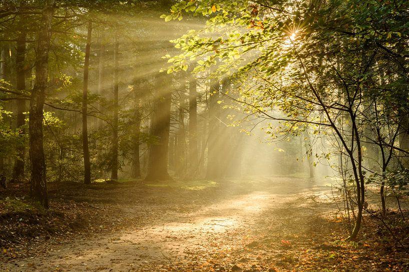 Fairytale Forest van Ellen van den Doel