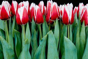 schöne Tulpen von eric van der eijk