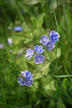 Een bloemetje voor jou von Peter Hartman