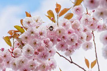 Fleur rose avec bourdon sur Arja Schrijver Fotografie