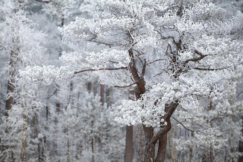 Frozen kingdom van Olha Rohulya