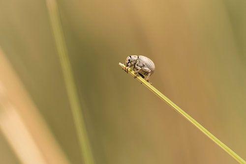 Een klein insectje loopt over helmgrasspriet op Terschelling van