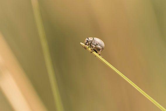 Een klein insectje loopt over helmgrasspriet op Terschelling