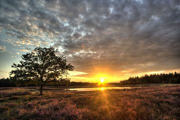 heide bij zonsondergang von rik janse