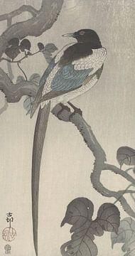 Ekster op boomtak van Ohara Koson