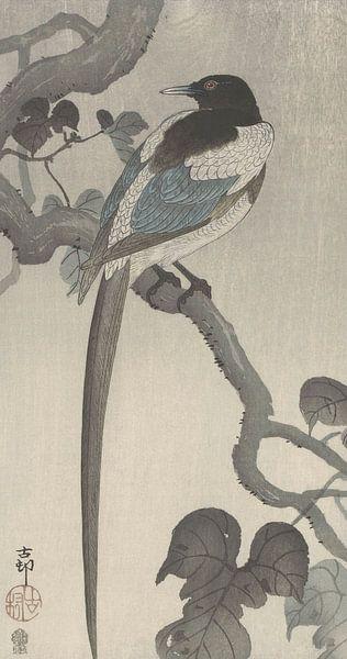 Ekster op boomtak van Ohara Koson van Gave Meesters