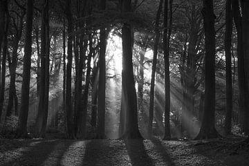 Sonnenstrahlen von Stephen Young