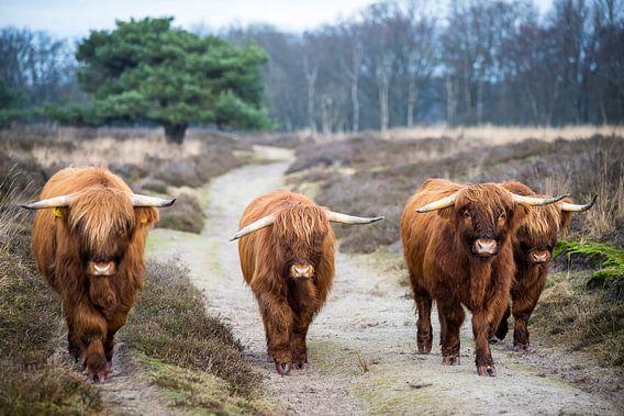 Schotten in Drenthe