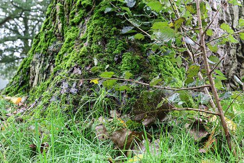 groene boom leijpark tilburg