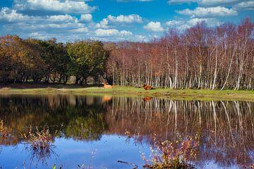 Dynamischer Wald mit Highlanders von Wendy Tellier - Vastenhouw