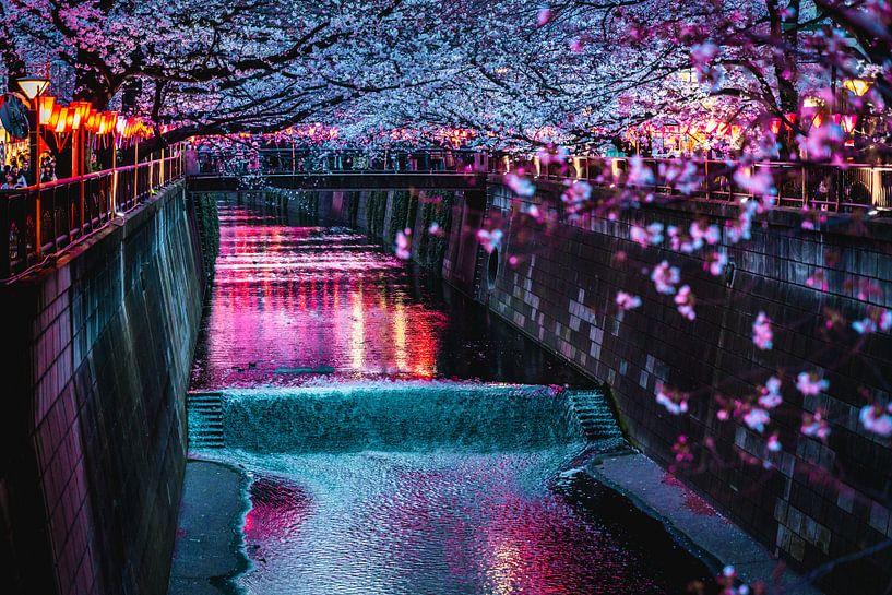 Meguro river met kersenbloesems in Tokyo van Mickéle Godderis