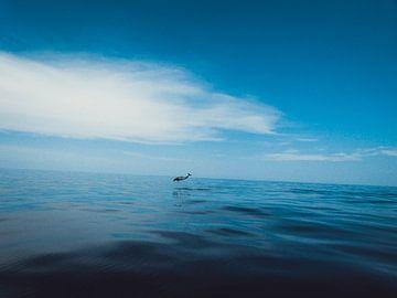 Dolfijn van Stedom Fotografie