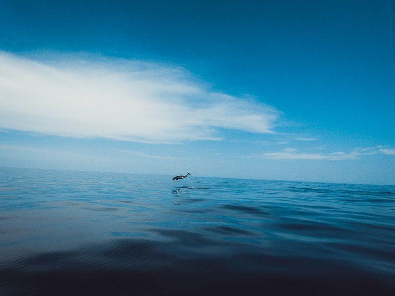 Dolfijn von Stedom Fotografie