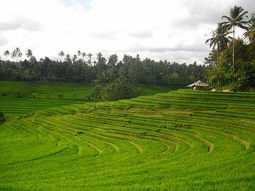 Rijstvelden Bali Indonesie van Sander van Klaveren