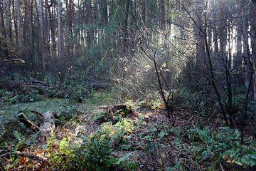 Zonnestralen komen achter de bomen vandaan