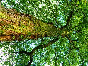 Tree Magic 104