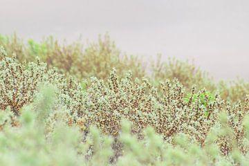 Mooie groen in de duinen von Lendy Fotografie .