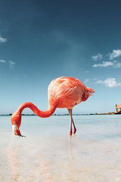 Flamingo Strand auf Aruba von Marit Lindberg