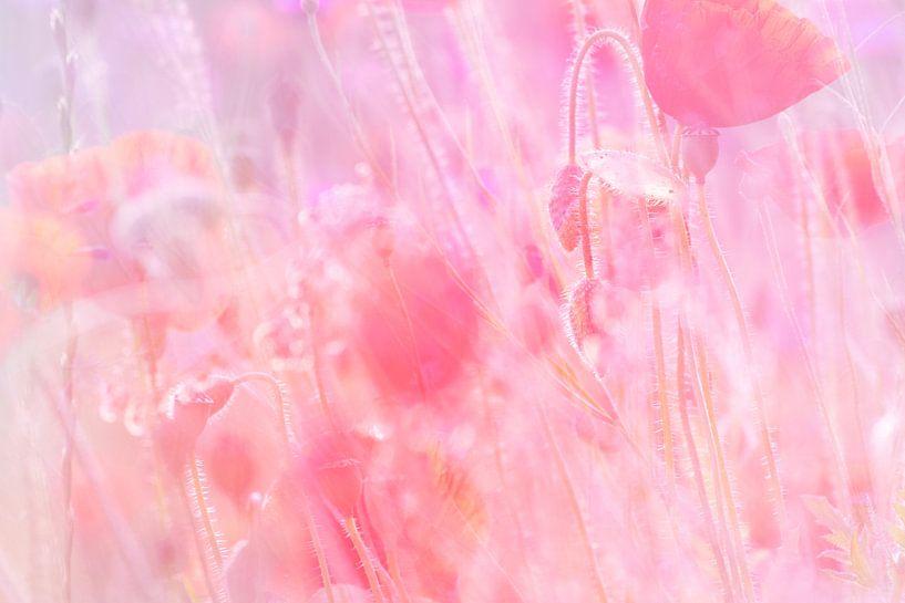 Dreamy Poppies van Nanda Bussers