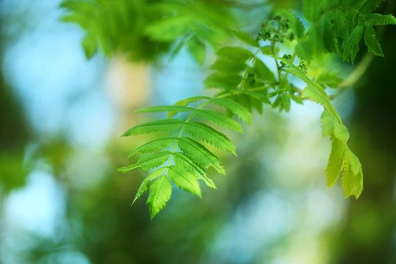 Fresh Green... van LHJB Photography