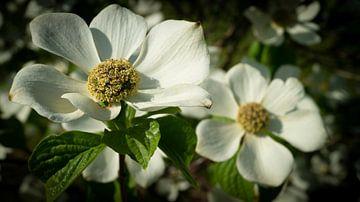 Die Blumen im botanischen Garten von Wageningen von ticus media