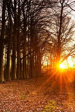 Zonnestralen door de bomen von Ronald Buitenhuis