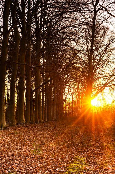 Zonnestralen door de bomen van Ronald Buitenhuis